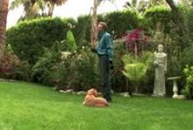 Perfect Dog Training Videos / Watch and learn Don Sullivan The DogFather's secrets to training your #dog