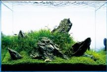 Nature Aquarium Therapy / The most beautiful aquascapes in the world (mostly Fw/Na)