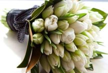 ~ Tulips ~ / My favorite flowers