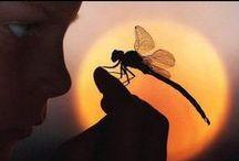 Butter/Dragonflies