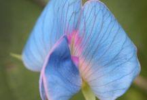 Orchidee e fiori rari / I fiori piu belli del mondo
