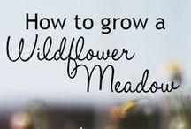 Gardening Goddess / Gardening tips and ideas we love.