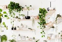 Indoor garden / Add some greens into your life.