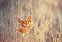 The Beautiful Nature FALL ♥