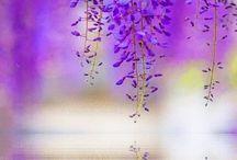 The Beautiful Nature PURPLE ♥