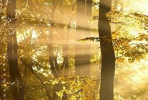 The Beautiful Nature GOLD ♥
