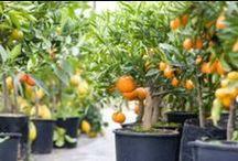 Aprendiendo...cultivando... / by Sandy Barahona