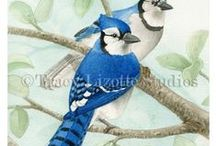 Bird Tree Collection / This collection of watercolors is full of beautiful backyard song birds that's fun to mix and match!