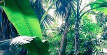*Happy* évasion dans la jungle / Dans ce tableau retrouvez toutes mes inspirations voyage dans la jungle ! #voyage #travel #jungle #aventure