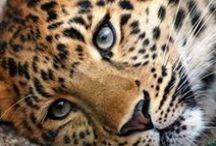 Amazing Animals / Animals