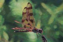 Wildlife Art / fine art paintings of wildlife by various artists