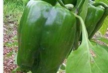 Garden / Vegetables, Fruits, Herbs, Etc...