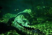 Reptiles/Amphibians