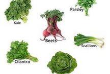Garden - Potager / Herbs - Fruit - Lettuces - Vegetables