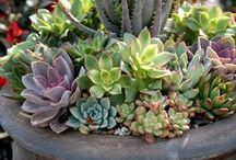 Garden - Ideas for my Urns and Pots / Beautiful Plants in Containers