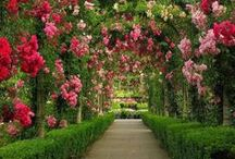 Gardens and plants I love
