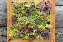 Garden - Vertical Gardens / Vertical Planting