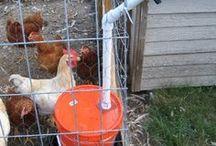 »Farm Animals«