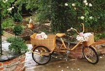 Bikes / by Linda Sumruld