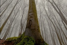 Trees...Birch are my favorite / by Shannon Niemeyer