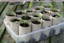 Que vivan las plantas / Jardinería
