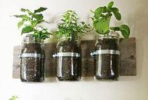 Home Produce & Gardening
