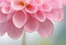 FLOWERS~!