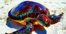 Sea Turtles / Sea Turtles  which is the icon for the website Profound Journey.com