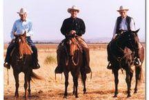 Horses Tres / Mostly American Breeds / by Lynn Leyda
