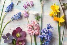 Spring Inspiration / Our favourite season - Spring!