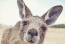 <3 Australia *_*