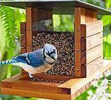 пташиний дім - їдальня