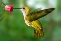 Pretty Bird / by Barbara Long