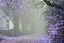 In the Mist... / Intriguing Photos of Misty Moments / by Cheryl Snyder