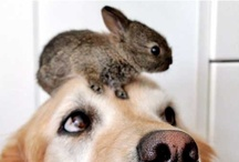A weakness for wabbits / I may die from cuteness! <3