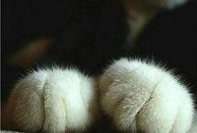CATS / by Alexandra Deitrick