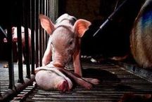 This is why... / I'm often asked why I don't consume animal products. There are so many reasons why. / by Sara Bentley