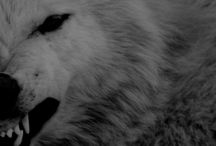 | book; the witcher | / the white wolf.