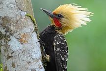 Woodpeckers / by Sandy Whittaker