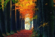 Incredible Trees / by Sandy Whittaker