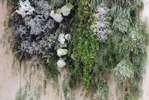 Curious Blooms / Floral Inspiration
