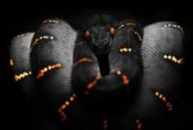 Snakes / creepy and beautyful at the same time