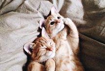 • cuteness