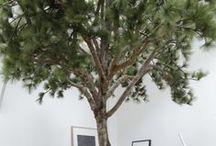 Curious Interior Trees