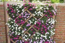 Garden / garden diy