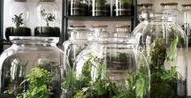 Botanic Terrarium