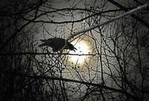 Moonlight, Howls & Black Feathers...