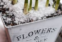 flowers / flowers | gardening
