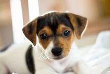 HUNDAR 1 / Hundar oc även några andra djur