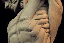 Lab_anatomy